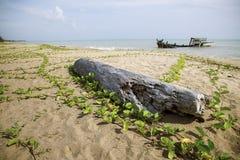 Il vecchi ceppo di albero e barca del relitto sul mare tirano Fotografie Stock