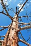 Il vecchio albero Fotografie Stock