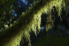 Il vecchio albero Fotografia Stock