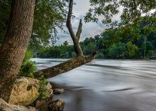 Il vecchio albero appende sopra il vasto fiume francese Fotografia Stock