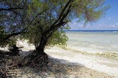 Il vecchio albero secco sulla spiaggia Fotografia Stock