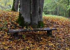 Il vecchio banco con l'arancia lascia nella foresta Fotografia Stock Libera da Diritti