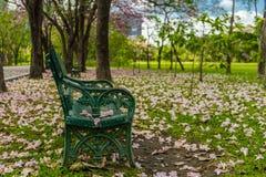 Il vecchio banco verde nel parco Fotografia Stock Libera da Diritti
