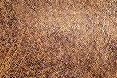 Il vecchio cuoio di Brown ha strutturato il fondo, la progettazione di modo, carta da parati Fotografia Stock