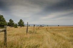 Il vecchio filo spinato recinta il campo asciutto Immagini Stock Libere da Diritti