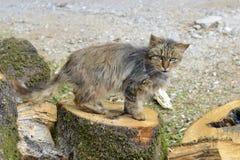 Il vecchio gatto riposa al sole Immagine Stock Libera da Diritti
