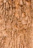 Il vecchio legno ha crepe Fotografia Stock Libera da Diritti