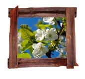 Il vecchio legno incornicia la sorgente Fotografie Stock Libere da Diritti