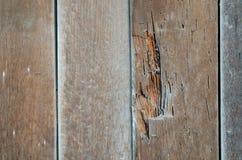 Il vecchio legno non è usato perché termiti immagine stock