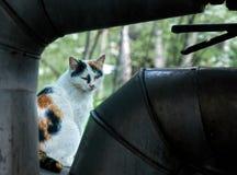 Il vecchio multi colore ijured ed il ritratto all'aperto del gatto senza tetto affamato immagine stock