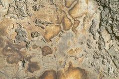 Il vecchio muro di cemento stagionato con i danni e le crepe strutturano il fondo Immagine Stock