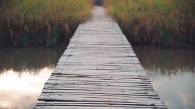 Il vecchio ponte di legno di bambù sopra il fiume ed il riso sistemano Fotografie Stock Libere da Diritti