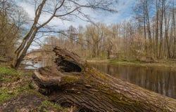 Il vecchio tronco di albero si trova sulla sponda del fiume closeup Immagine Stock