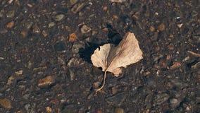 Il vento di autunno soffia e scuote la foglia caduta su asfalto scuro video d archivio