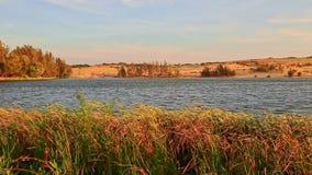 Il vento scuote l'alta erba alla Banca del lago contro la foresta dalle dune di sabbia stock footage