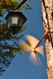 Il vento si è levato Fotografia Stock Libera da Diritti