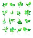 Il verde copre di foglie icone Fotografie Stock Libere da Diritti