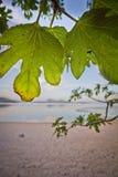 Il verde copre di foglie lago Fotografia Stock Libera da Diritti