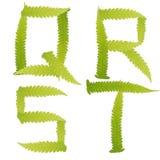Il verde del carattere lascia la felce isolata Fotografie Stock Libere da Diritti