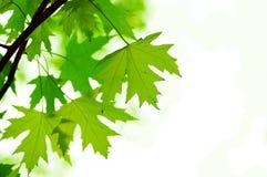 il verde del fuoco lascia poco profondo Fotografie Stock