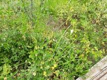 Il verde della natura del verde di borboleta di Natureza Flores fiorisce l'aria aperta Immagine Stock Libera da Diritti