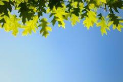 il verde della priorità bassa di autunno lascia il colore giallo Immagine Stock