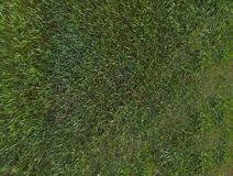 il verde di erba 3d ha reso la struttura Fotografia Stock