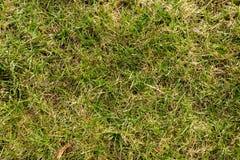 il verde di erba 3d ha reso la struttura Fotografie Stock