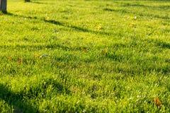 il verde di erba 3d ha reso la struttura Immagini Stock Libere da Diritti