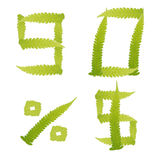Il verde di numero lascia la felce isolata Fotografia Stock Libera da Diritti