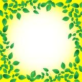 Il verde fresco va e lustro del sole, blocco per grafici Fotografia Stock Libera da Diritti