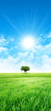 Il verde gradisce un prato al sole Fotografia Stock