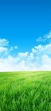 Il verde gradisce un prato al sole Fotografie Stock