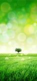 Il verde gradisce un prato al sole Fotografia Stock Libera da Diritti