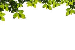 Il verde lascia il blocco per grafici isolato su priorità bassa bianca fotografie stock libere da diritti