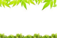 Il verde lascia il blocco per grafici isolato su priorità bassa bianca fotografia stock