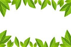 Il verde lascia il blocco per grafici isolato su priorità bassa bianca fotografie stock