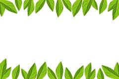Il verde lascia il blocco per grafici isolato su priorità bassa bianca immagini stock libere da diritti