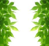 Il verde lascia il blocco per grafici fotografia stock