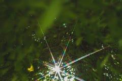 Il verde lascia il bordo Fotografia Stock