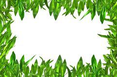 Il verde lascia il bordo Fotografia Stock Libera da Diritti