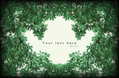 Il verde lascia il bordo del nero dell'annata di stile del blocco per grafici Fotografia Stock Libera da Diritti