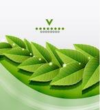 Il verde lascia il disegno della natura Fotografie Stock