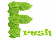 Il verde lascia il marchio fresco Fotografia Stock Libera da Diritti