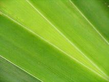 Il verde lascia il primo piano Fotografia Stock Libera da Diritti