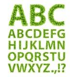 Il verde lascia la fonte tipografica Immagine Stock