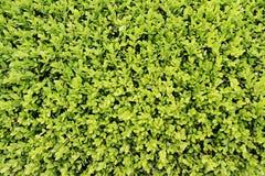 Il verde lascia la priorità bassa immagine stock