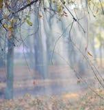 Il verde lascia la priorità bassa Fotografia Stock