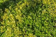 Il verde lascia la priorità bassa Fotografie Stock Libere da Diritti