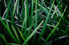 Il verde lascia la priorità bassa astratta fotografia stock